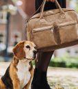 beagles_v2